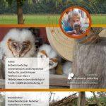 uilenbeschermer gezocht 2